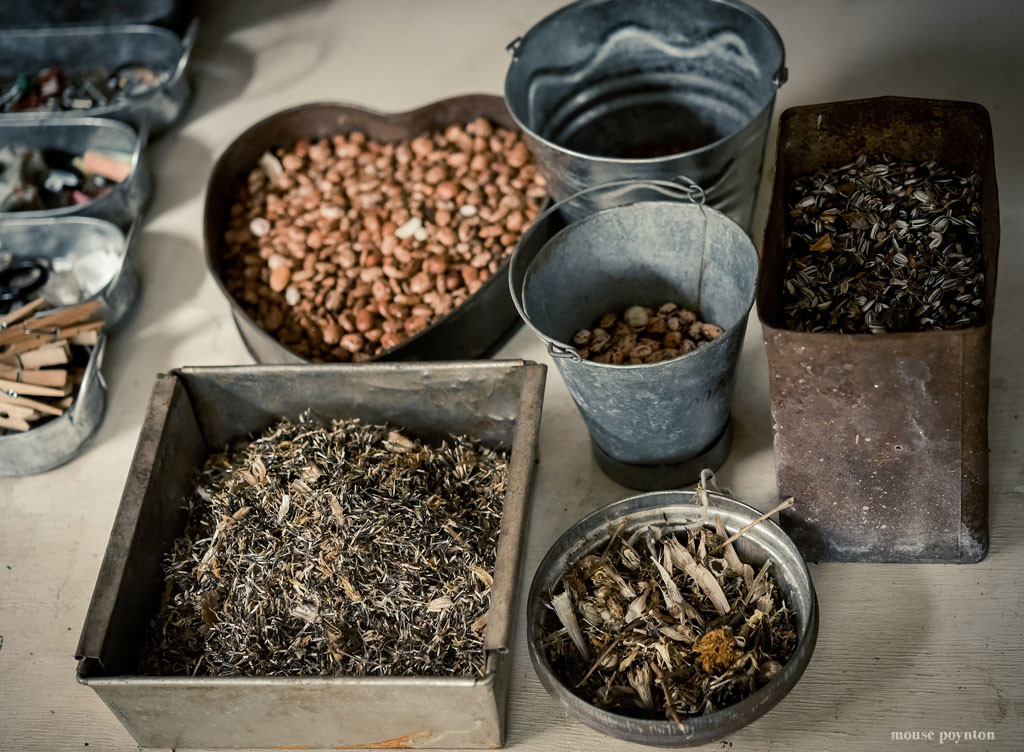 seed-collecting-1-4_BS
